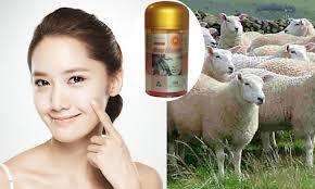Trị Nám Da Hiệu Quả Với Nhau Thai Cừu