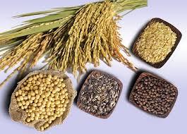 ăn ngũ cốc thay tinh bột